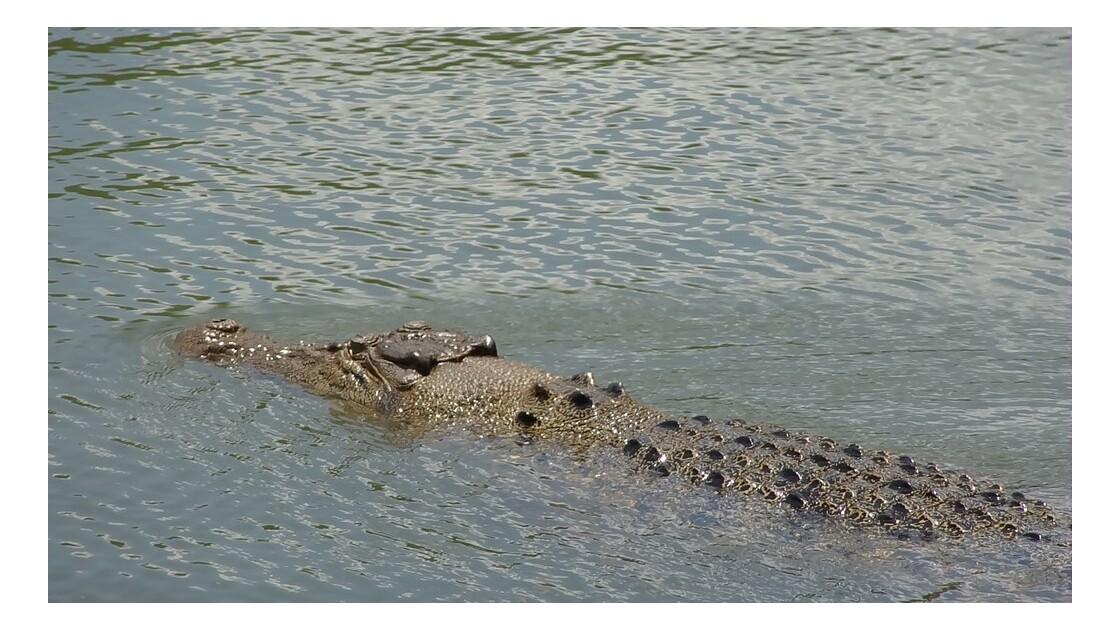 Australie Kakadu Park Yellow Water Saltie 5