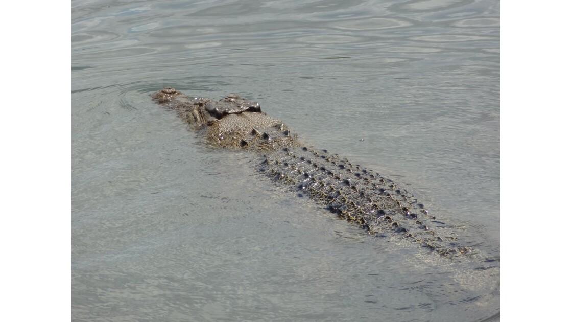 Australie Kakadu Park Yellow Water Saltie 6