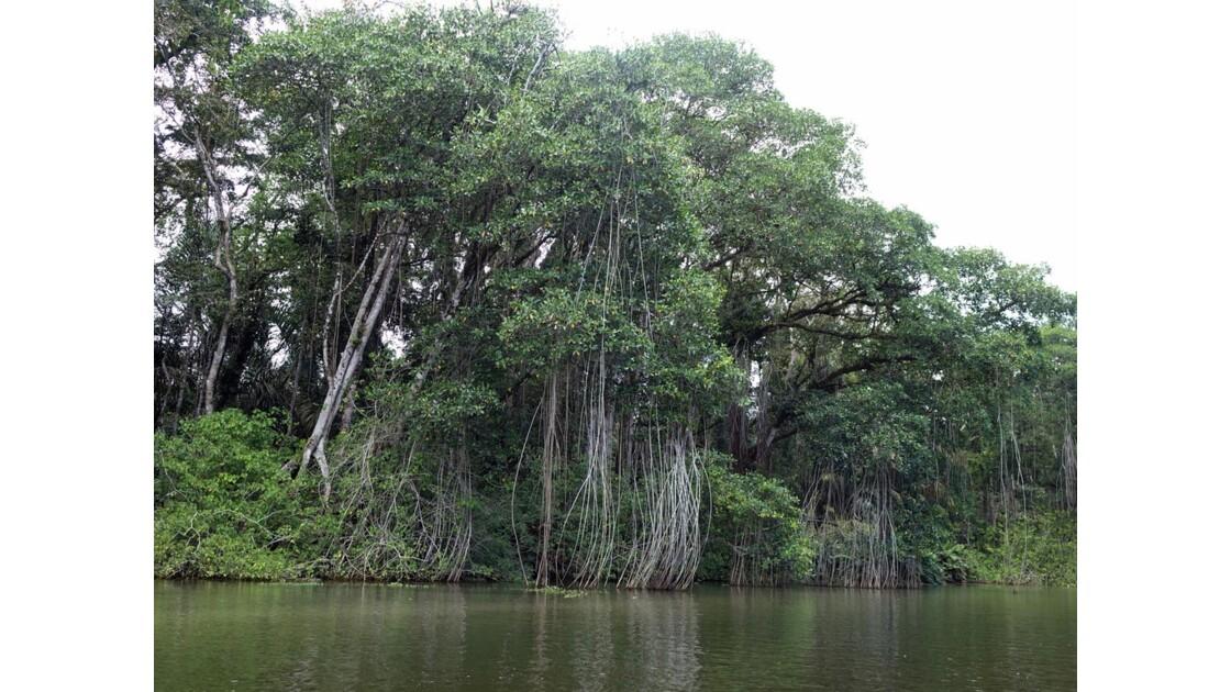 Costa Rica Tortuguero Sur le canal principal 3