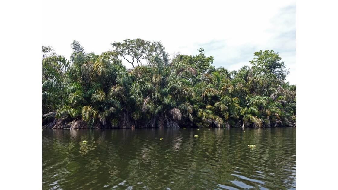 Costa Rica Tortuguero Sur le canal principal 1