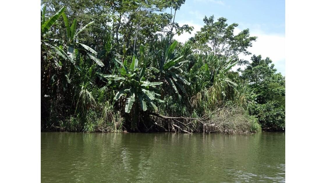 Costa Rica Tortuguero Sur le canal principal 5