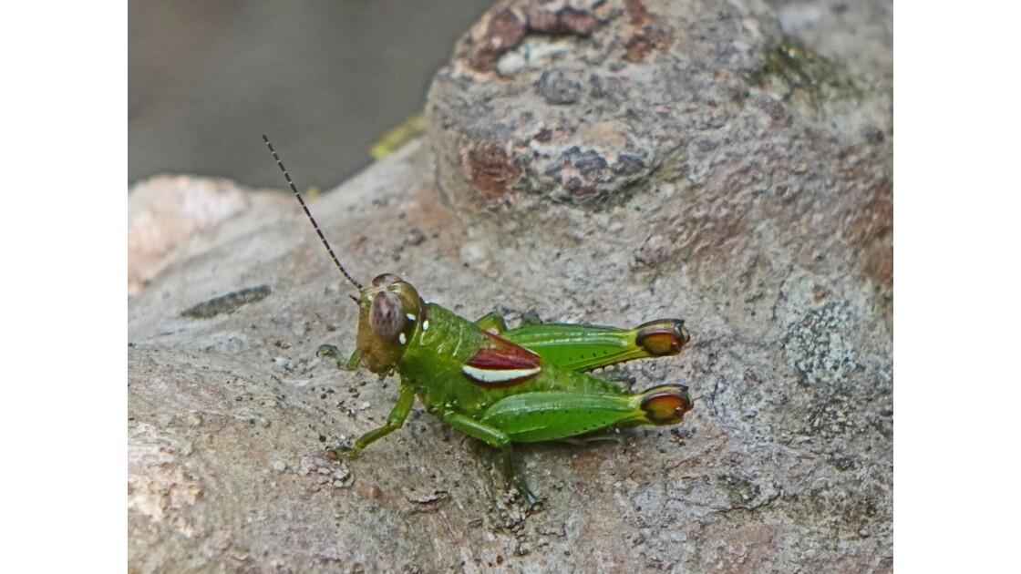Costa Rica Tortuguero insecte 1