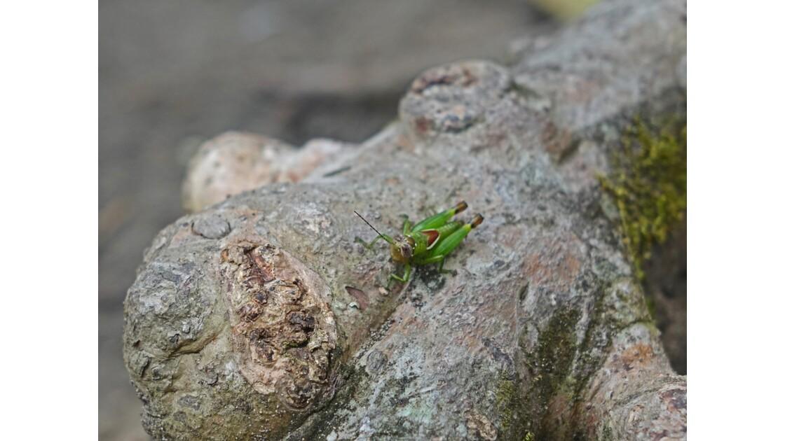 Costa Rica Tortuguero insecte 2
