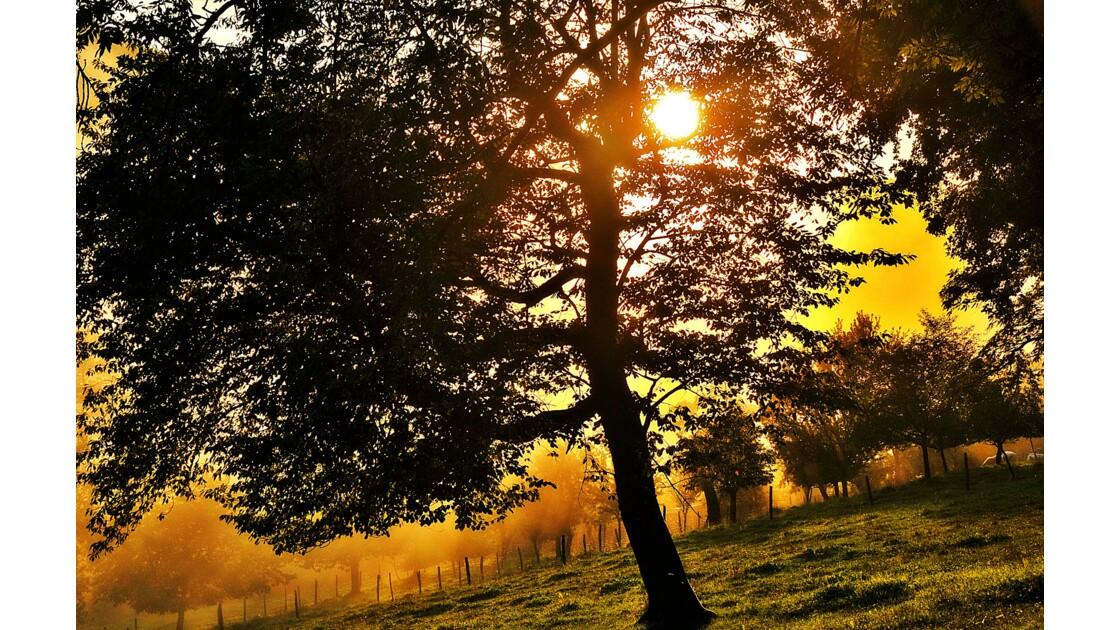 ~~L'arbre dans la brume~~