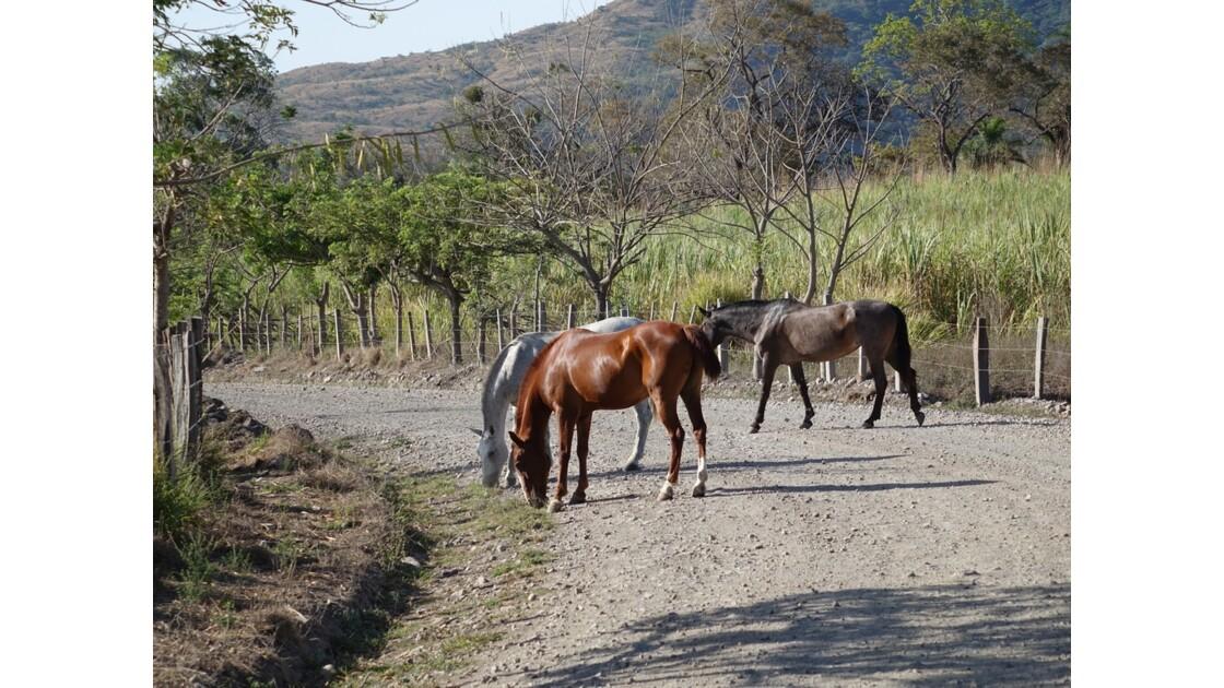 Costa Rica Autour du  Ricon de la Vieja 3