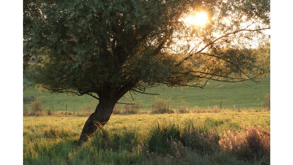 Au couchant de l'arbre