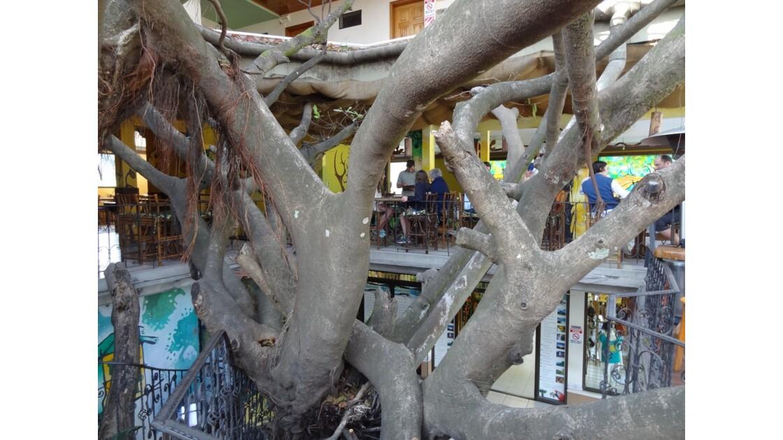 Costa Rica Santa Helena Tree House restaurant 1