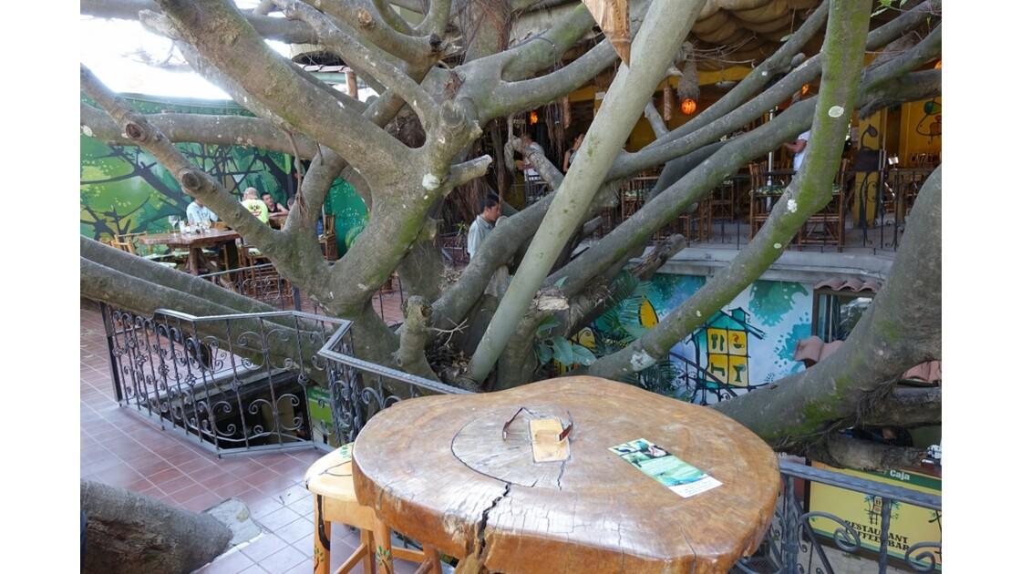 Costa Rica Santa Helena Tree House restaurant 3