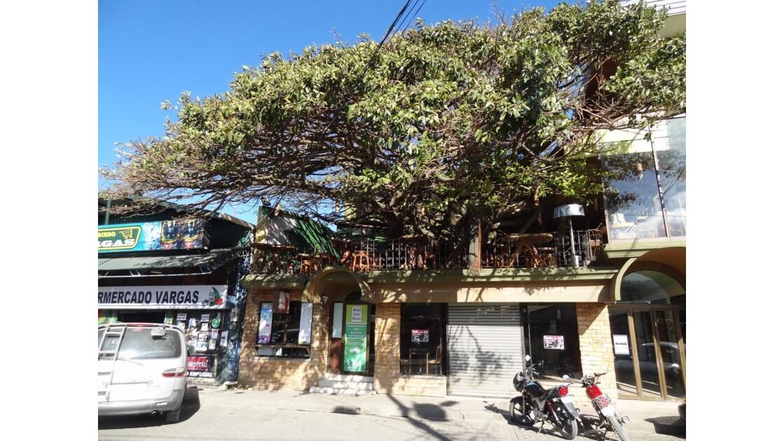 Costa Rica Santa Helena Tree House restaurant 4