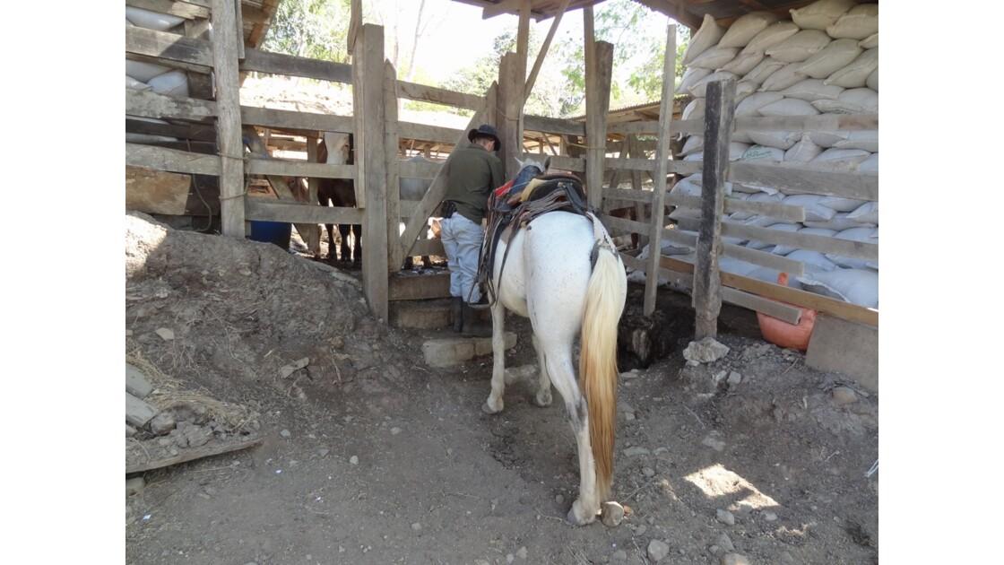 Costa Rica Sur la piste de Monteverde sabanero 2