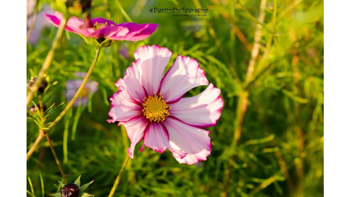 Fleur d'Automne suite.
