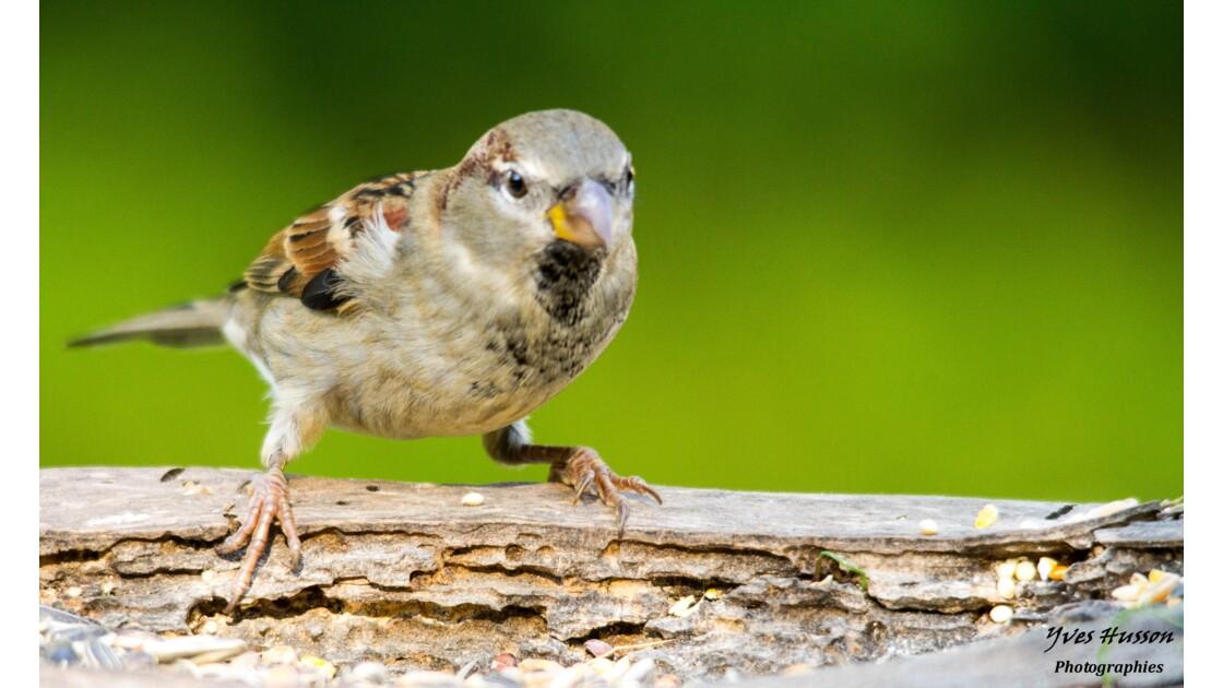 Les oiseaux prennent la pose ...