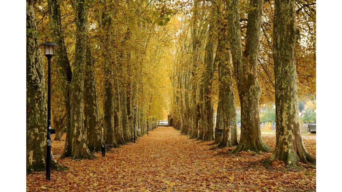 Promenade dans les feuilles mortes