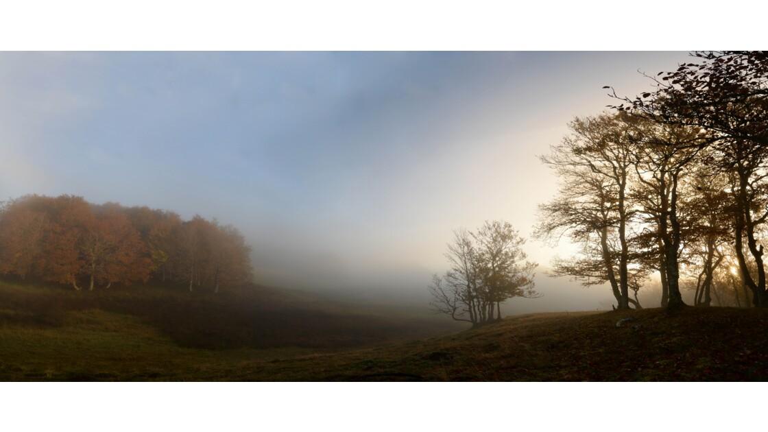 brume matinal