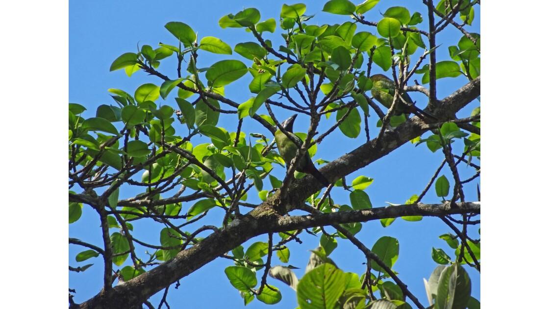 Costa Rica Monteverde Toucan