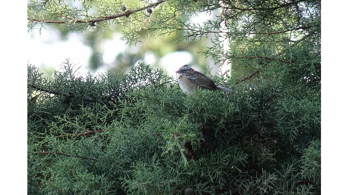 Costa Rica oiseau du Monteverde