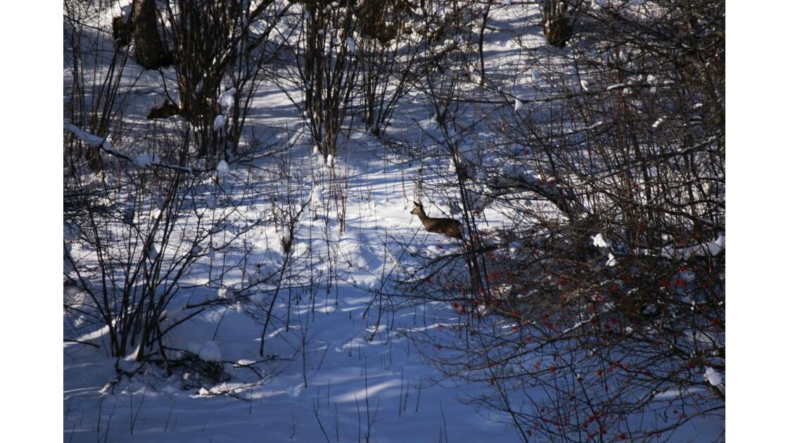 Chevreuil en sous-bois