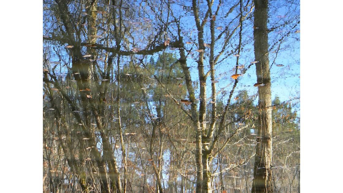 Reflet des bois