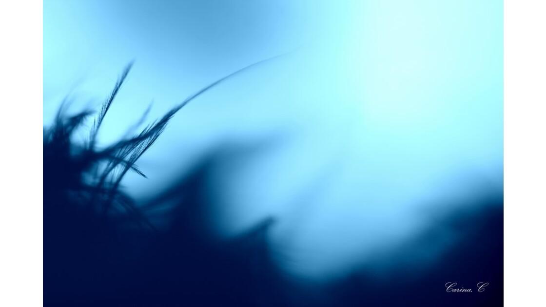 flots bleus