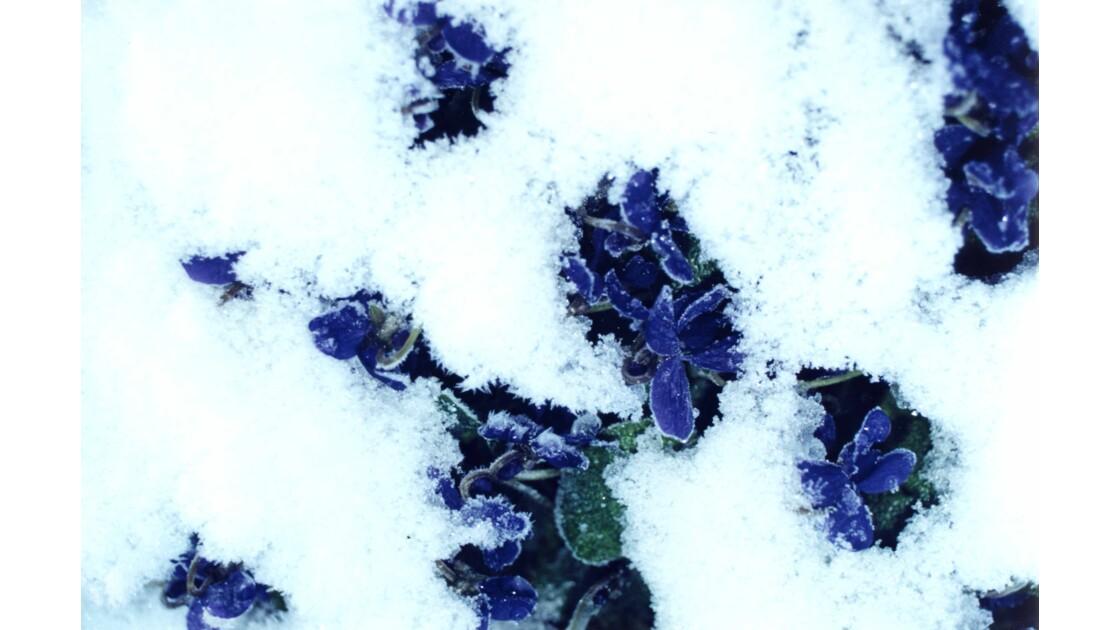 Printemps sous la neige