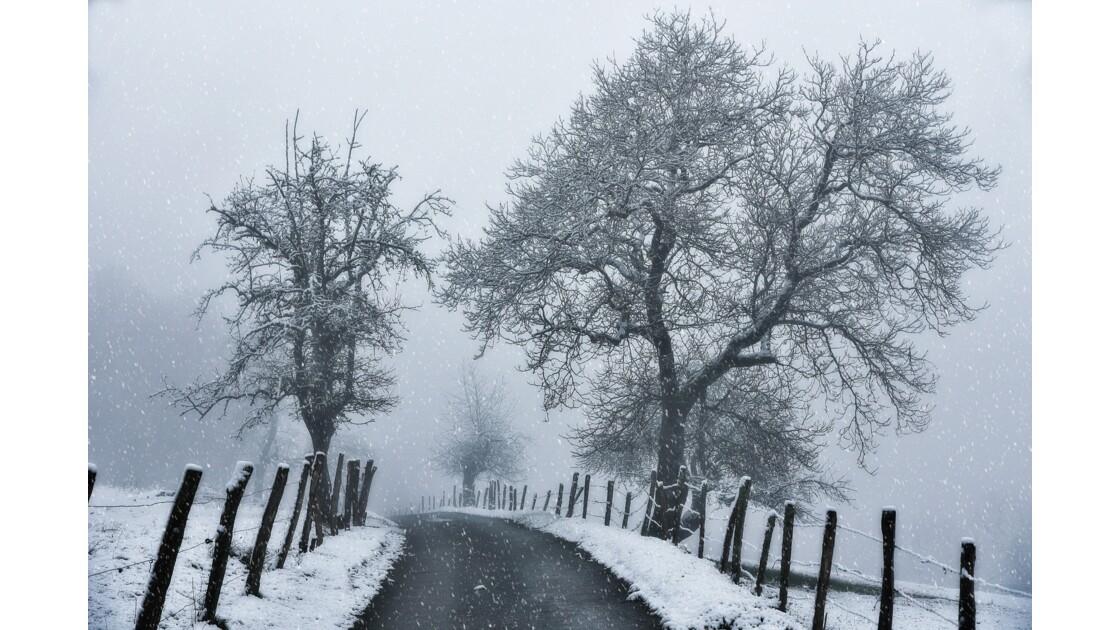 L'hiver sur mon petit chemin...