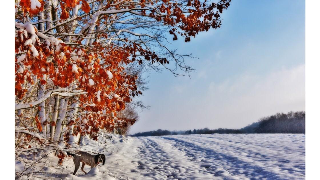 Quand l'automne se mélange à l'hiver...
