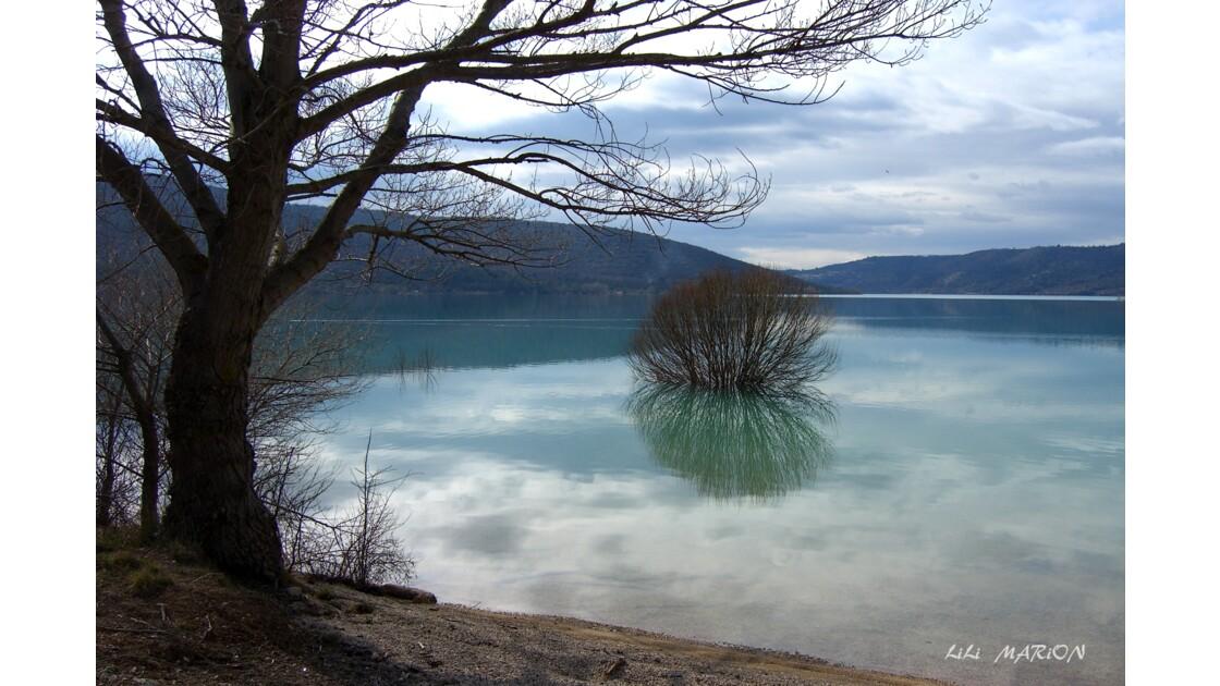 Buisson du Lac de Ste Croix (83)