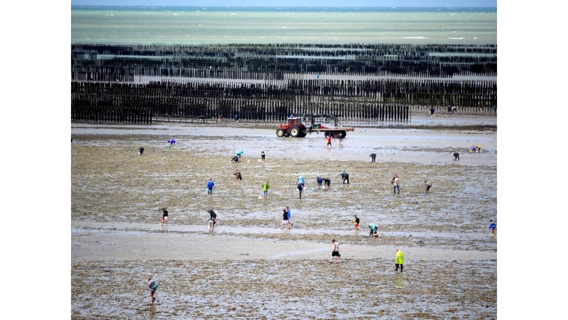 La pêche à la palourde sur les côtes de la Manche