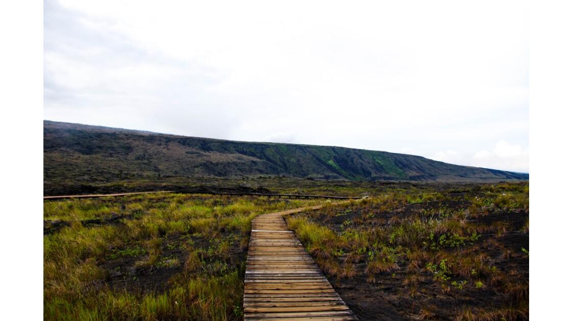 Chemin au cœur du parc des Volcans