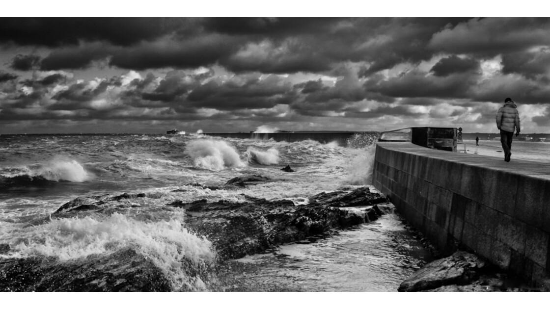 GEO La vie au bord de l'eau - Querqueville 020 (Manche)