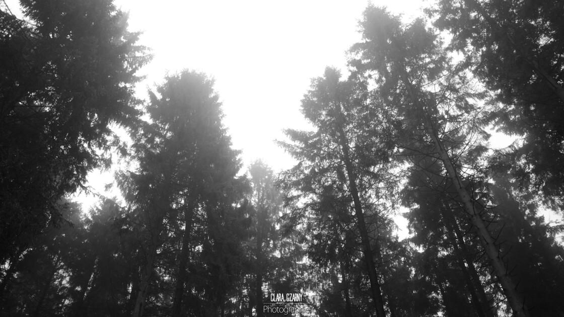 Entre forêt et ciel