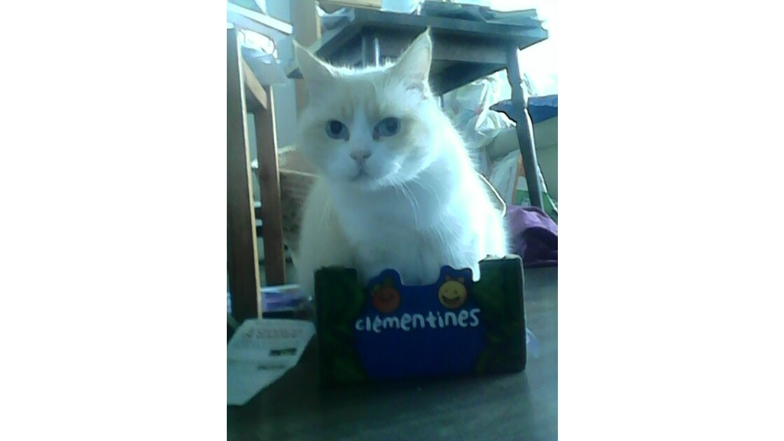 raja , mon chat