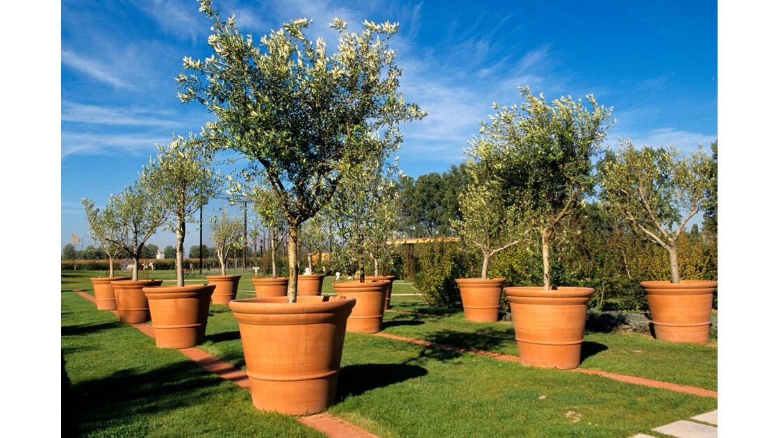Les arbres en pots