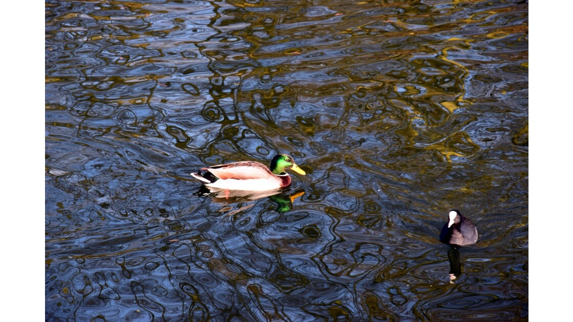 vies  au bord de l'eau