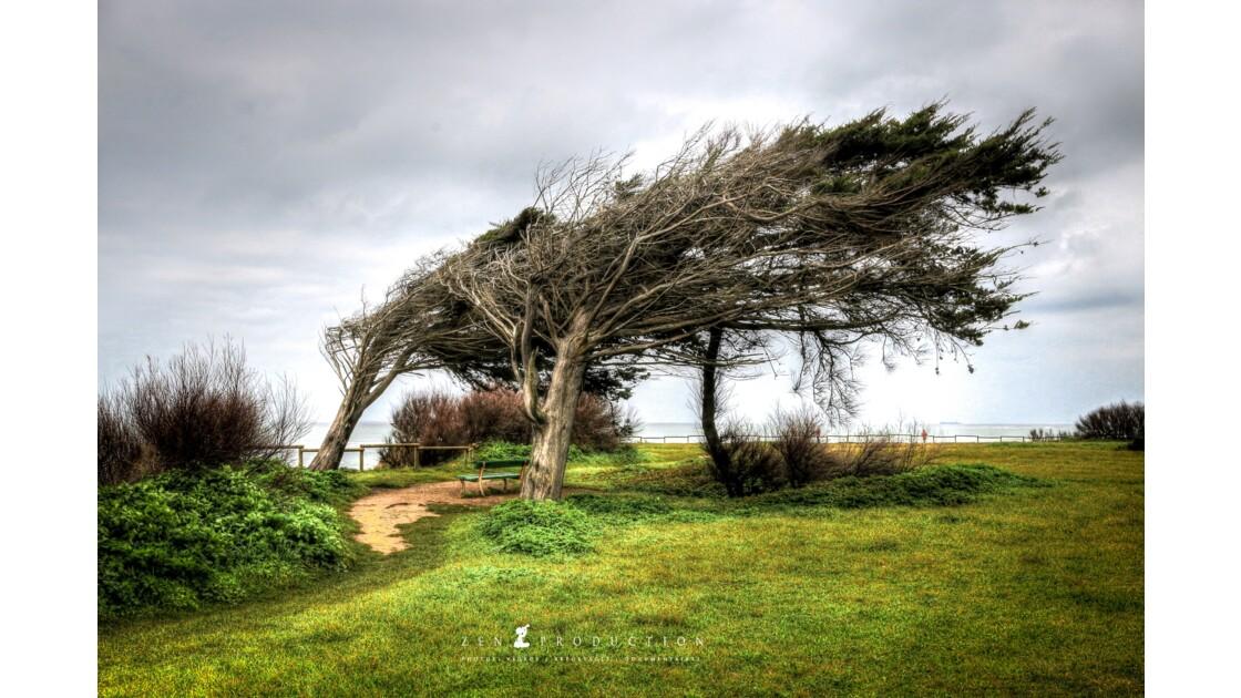 Les arbres couchés de Chassiron
