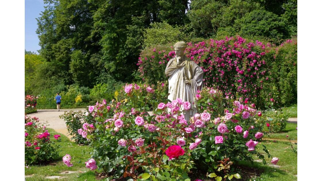 La roseraie du Thabor
