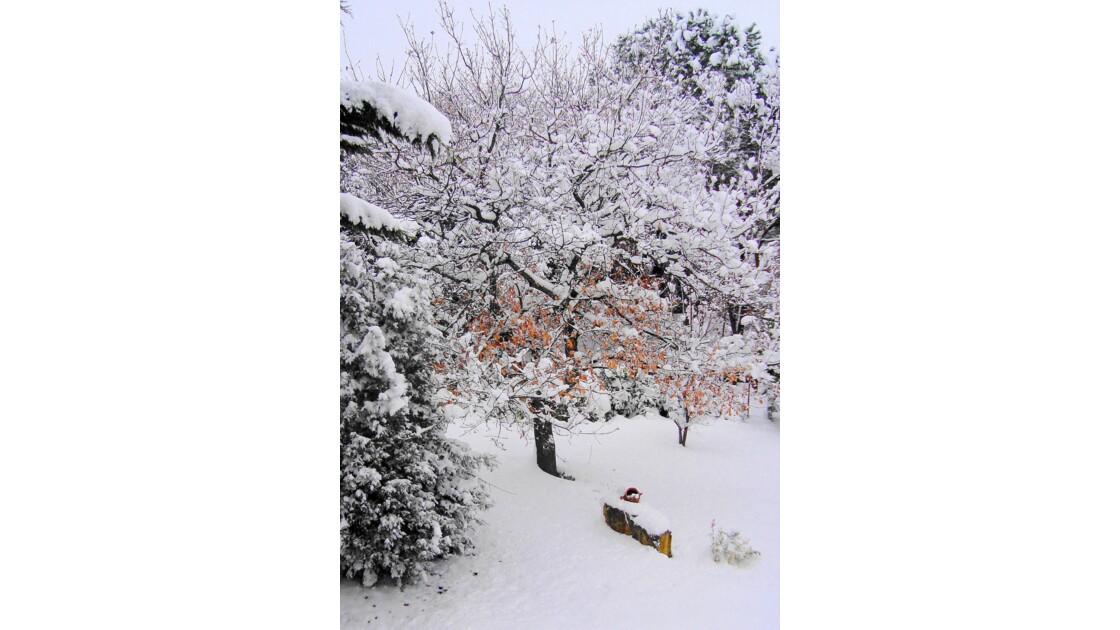 Mon jardin, un matin d'hiver 2010