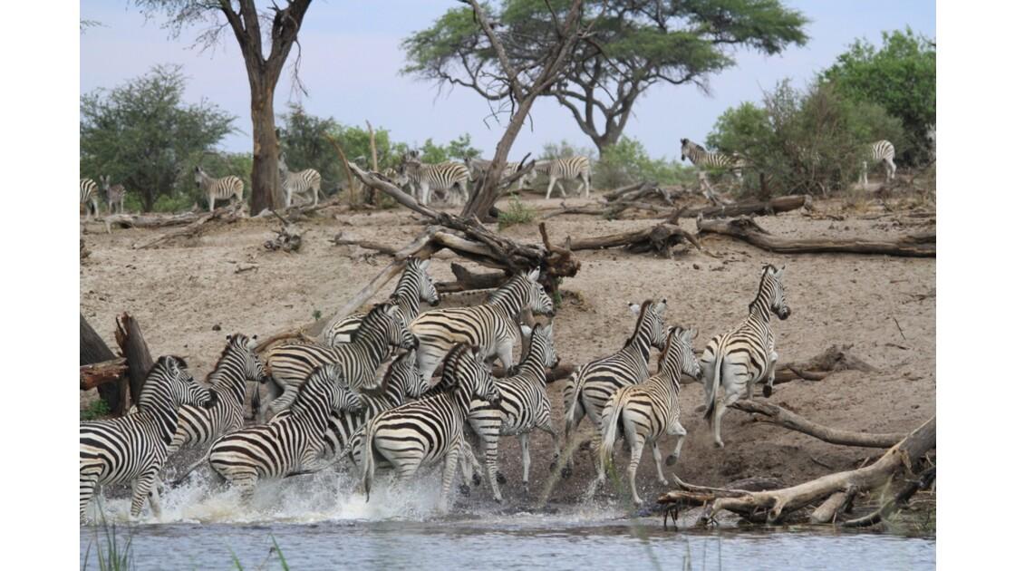 Safari bostwana