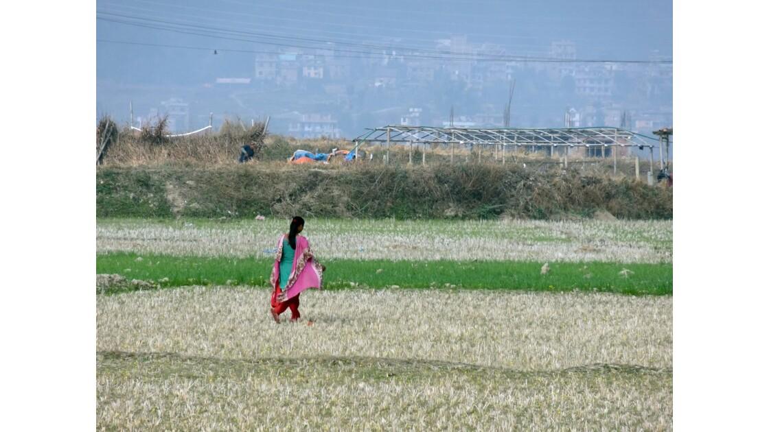 Népal Sur la piste de Khokana 1