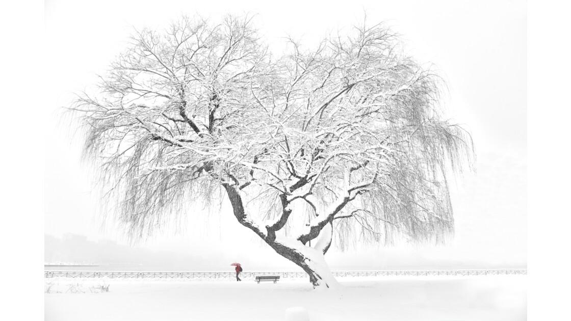 Jardin de l'hotel de ville Annecy, l'hiver