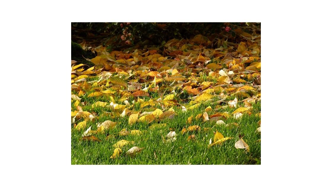 Tapis de feuilles mortes