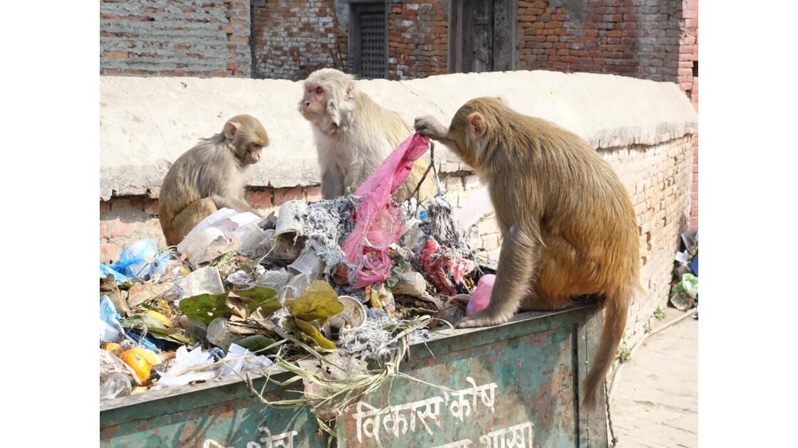 Népal Pashupatinath nettoyage 1