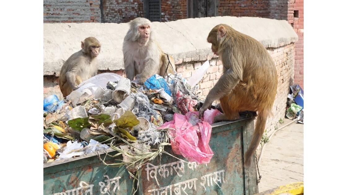 Népal Pashupatinath nettoyage 2