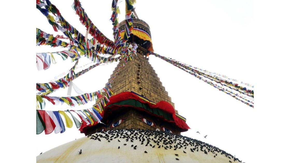 Népal  Les pigeons de Bodhnath 2