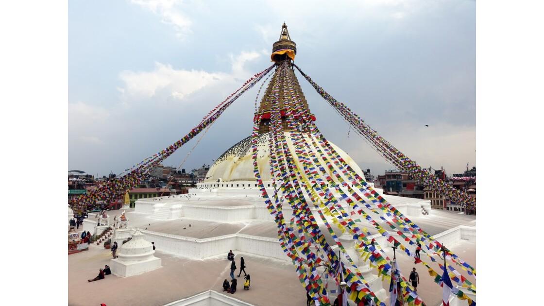 Népal  Les pigeons de Bodhnath 3