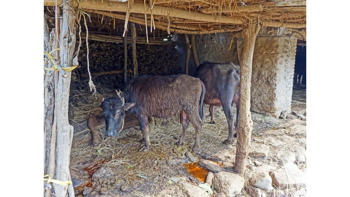 Népal Bandipur Trail Village près de la Prithvi Highway 4