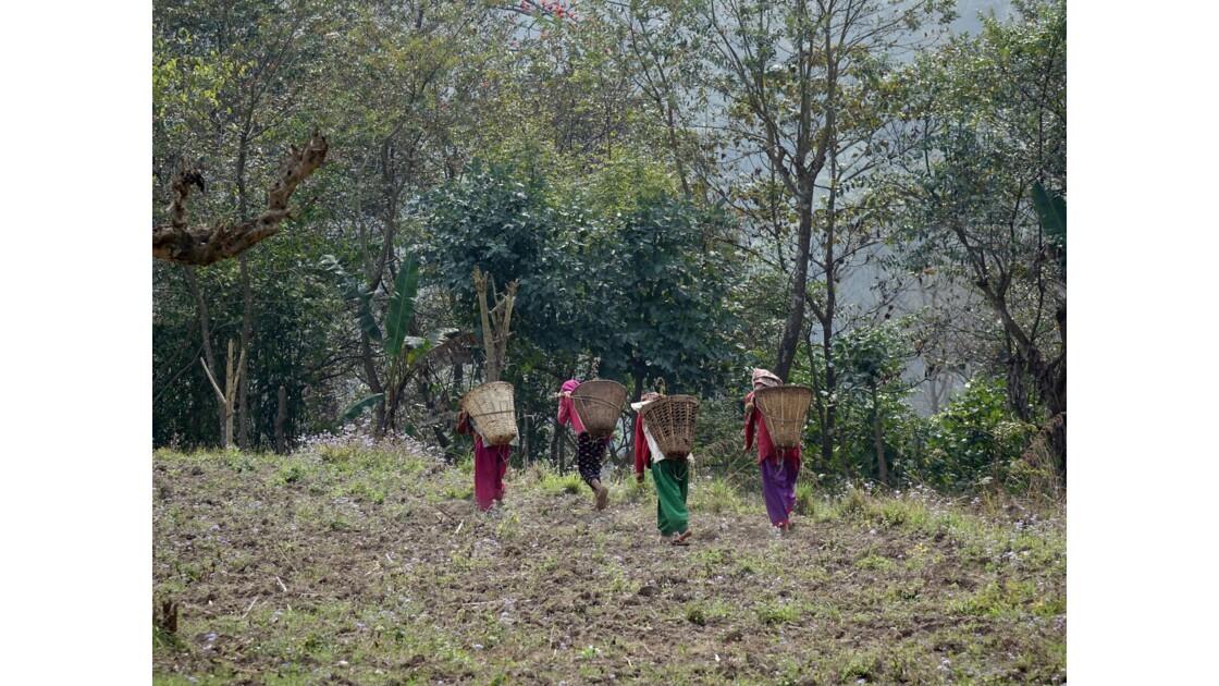 Népal Bandipur Trail Village près de la Prithvi Highway 6