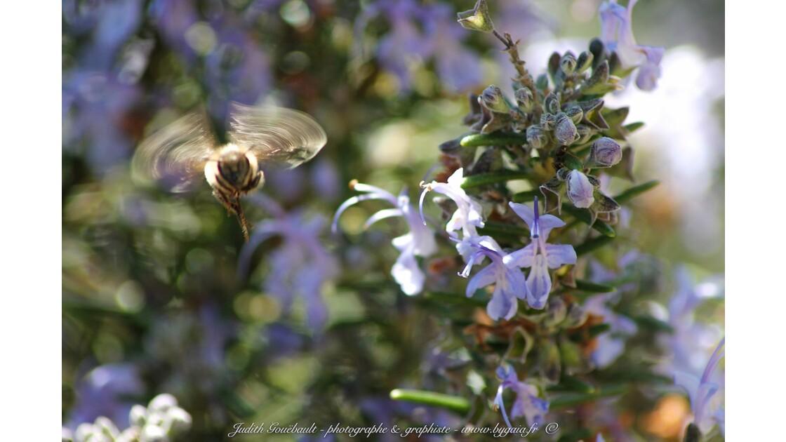 vole d'abeille