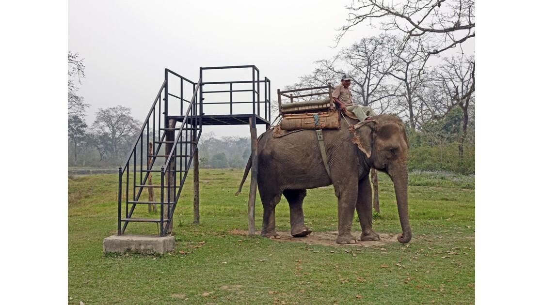 Népal Parc de Chitwan Prêt pour la promenade 1