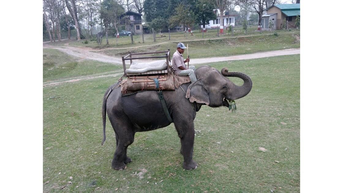 Népal Parc de Chitwan Prêt pour la promenade 2